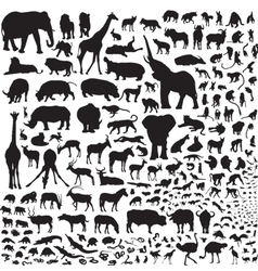 all the animals of Africa vector image