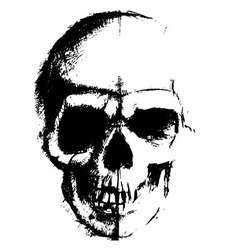 Skull sketch element vector image