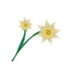 drawing daffodil flower image vector image