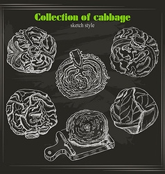 collection of cabbage in sketch style on dark vector image vector image
