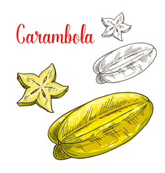 starfruit or carambola fruit isolated sketch vector image vector image