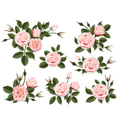 Pink rose boutonniere set vector