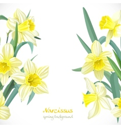 Yellow narcissus spring background vector