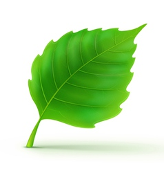 Green detailed leaf vector