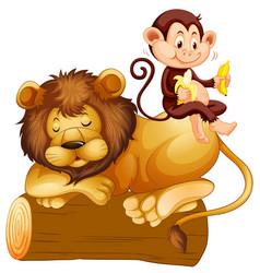 monkey sitting on lion vector image vector image