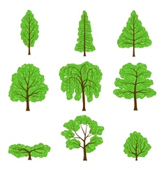 Set different crown of a trees isolated on white vector
