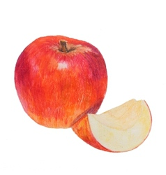 Watercolor colored pencils apple vector image