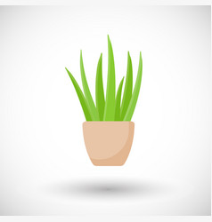 Aloe vera plant in pot flat icon vector