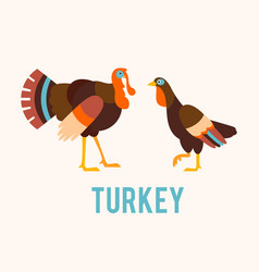 turkeys in a flat style vector image vector image