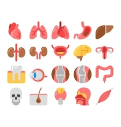 flat style Medical Icons with human organs vector image vector image
