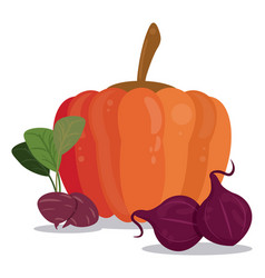 pumpkin beetroot vegetables food vector image