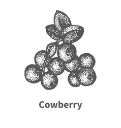 Sketch cowberry with leaves and branches vector image