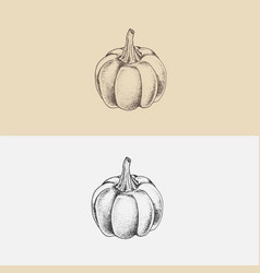 Hand drawn pumpkin vector
