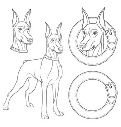 set of with a doberman in a collar vector image