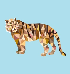 Tiger low polygon vector image