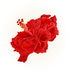 Red hibiscus corrugated simple tropical flower vector