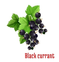 Black currant berries icon vector