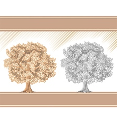 Detailed graphic tree sepia and pencil vector image vector image