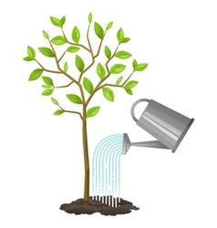 Watering tree from can image for vector