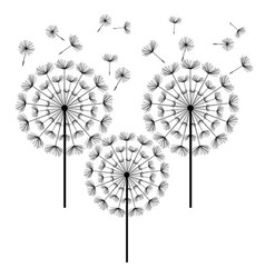 Black dandelion isolated on white background vector