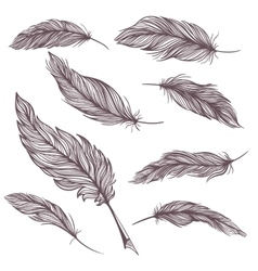 Elegant feathers set vector