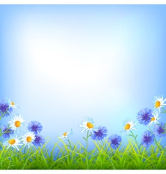 Field flowers daisy cornflower grass background vector