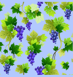 grapes pattern on blue background vector image