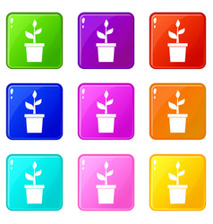 Plant in clay pot set 9 vector