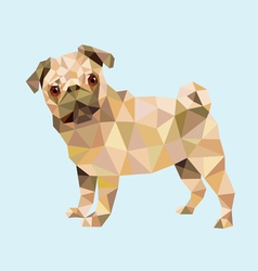 Pug dog low polygon vector image