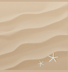 sand background texture vector image vector image
