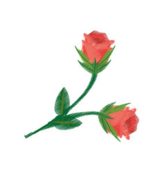 drawing rose flower image vector image