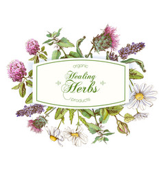 herbal frame vector image vector image