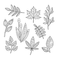 Set of Leaves and Branches in Handdrawn Style vector image vector image