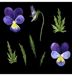 set of watercolor drawing violet flowers vector image