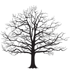 Black silhouette bare tree vector