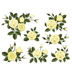 Yellow rose boutonniere set vector