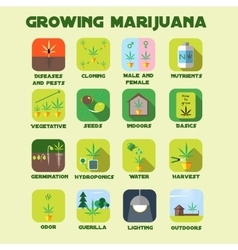 Marijuana growing icon set vector