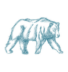 animal wild bear blue hand-drawing vector image