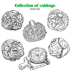 collection of cabbage in sketch style vector image vector image