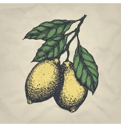 Branch with lemons hand drawn vintage style vector
