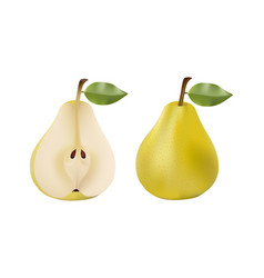 pears set on white background vector image