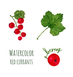 Watercolor with branch of red currant leaf and vector