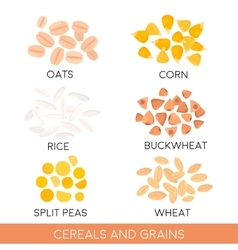 Cereals and grain oats rice buckwheat isolated vector