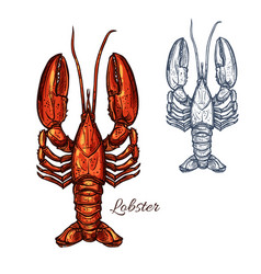Lobster seafood animal or crayfish sketch vector