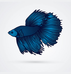 Blue siamese fighting fish graphic vector