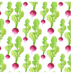Watercolor radish seamless pattern organic vector