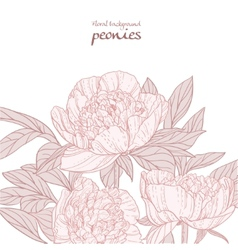 Beautiful peonies pink line art background vector image