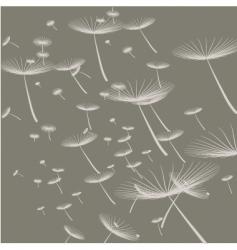 dandelion background vector image
