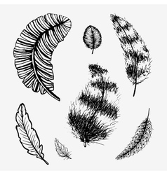 Hand drawn feathers set vector