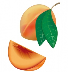Peaches vector